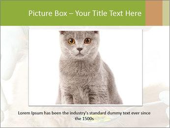 Cat PowerPoint Templates - Slide 16