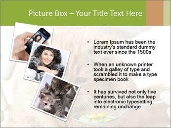 Cat PowerPoint Templates - Slide 17
