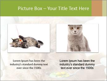Cat PowerPoint Templates - Slide 18