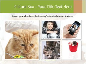 Cat PowerPoint Template - Slide 19
