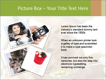 Cat PowerPoint Templates - Slide 23