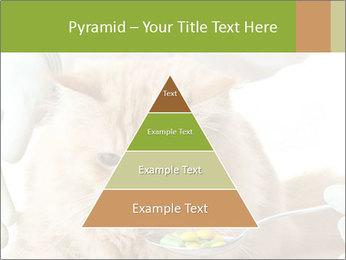 Cat PowerPoint Templates - Slide 30