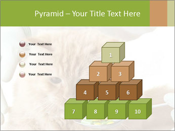 Cat PowerPoint Templates - Slide 31
