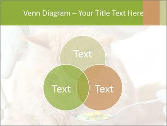 Cat PowerPoint Templates - Slide 33