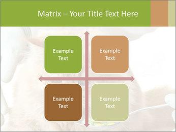 Cat PowerPoint Templates - Slide 37