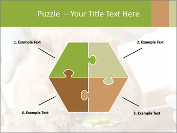 Cat PowerPoint Templates - Slide 40