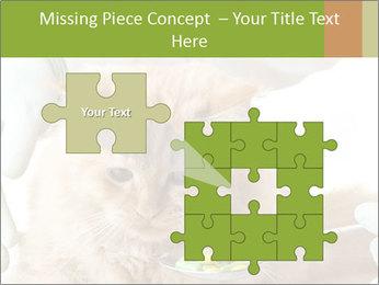 Cat PowerPoint Templates - Slide 45
