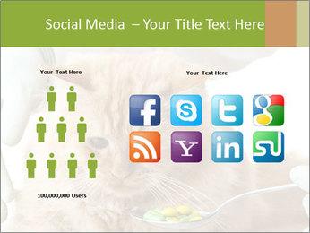 Cat PowerPoint Templates - Slide 5