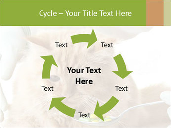 Cat PowerPoint Templates - Slide 62