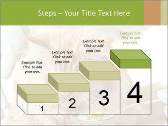 Cat PowerPoint Templates - Slide 64