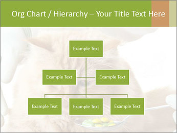 Cat PowerPoint Templates - Slide 66