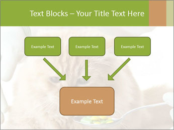 Cat PowerPoint Templates - Slide 70