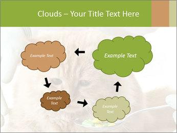 Cat PowerPoint Templates - Slide 72