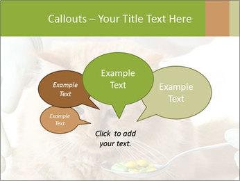 Cat PowerPoint Templates - Slide 73