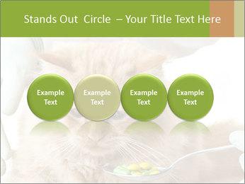 Cat PowerPoint Templates - Slide 76