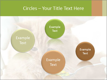 Cat PowerPoint Template - Slide 77