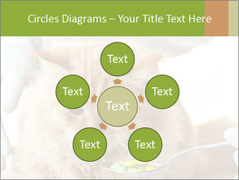Cat PowerPoint Templates - Slide 78