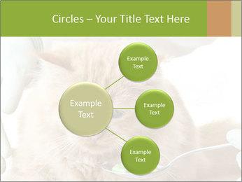 Cat PowerPoint Templates - Slide 79