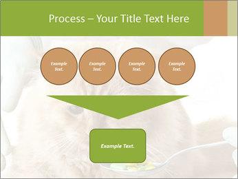 Cat PowerPoint Template - Slide 93
