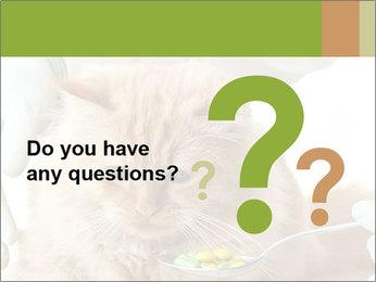 Cat PowerPoint Template - Slide 96