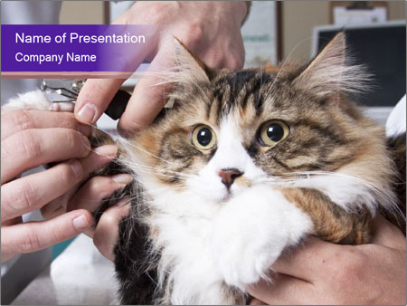 Trimming cat's PowerPoint Templates