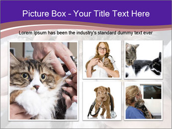 Trimming cat's PowerPoint Template - Slide 19