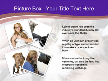 Trimming cat's PowerPoint Template - Slide 23