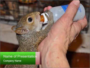 Squirrel PowerPoint Templates - Slide 1