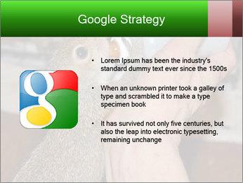 Squirrel PowerPoint Templates - Slide 10