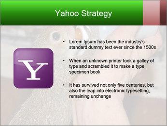 Squirrel PowerPoint Templates - Slide 11