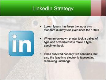 Squirrel PowerPoint Templates - Slide 12