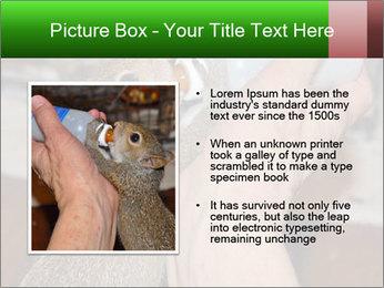 Squirrel PowerPoint Templates - Slide 13