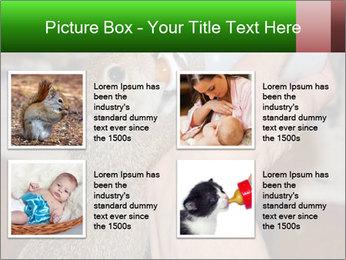 Squirrel PowerPoint Templates - Slide 14