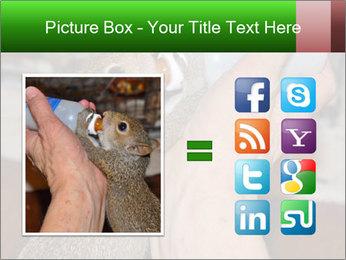 Squirrel PowerPoint Templates - Slide 21