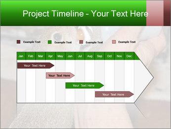 Squirrel PowerPoint Templates - Slide 25