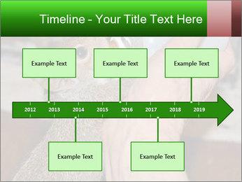 Squirrel PowerPoint Templates - Slide 28