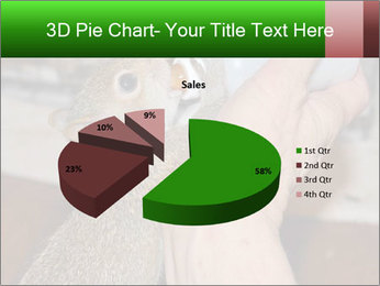 Squirrel PowerPoint Templates - Slide 35