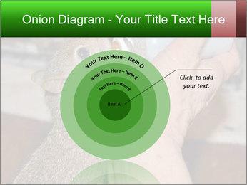 Squirrel PowerPoint Templates - Slide 61