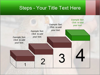 Squirrel PowerPoint Templates - Slide 64