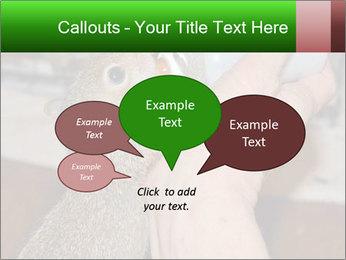 Squirrel PowerPoint Templates - Slide 73