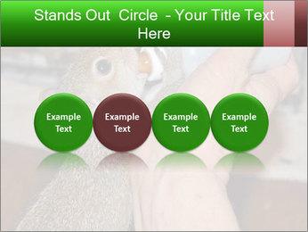 Squirrel PowerPoint Templates - Slide 76