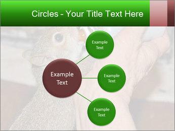 Squirrel PowerPoint Templates - Slide 79