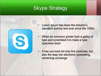 Squirrel PowerPoint Templates - Slide 8