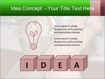 Squirrel PowerPoint Templates - Slide 80