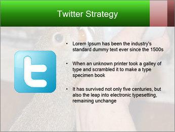 Squirrel PowerPoint Templates - Slide 9