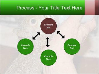 Squirrel PowerPoint Templates - Slide 91