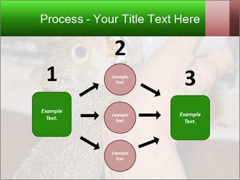 Squirrel PowerPoint Templates - Slide 92