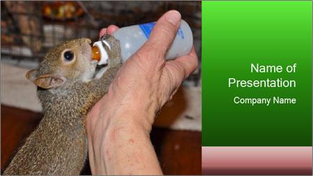 Squirrel PowerPoint Template