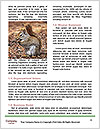 0000091854 Word Templates - Page 4