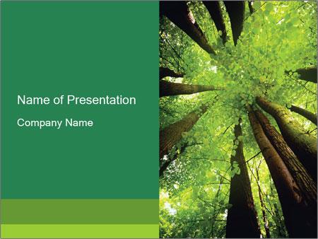 Beech PowerPoint Templates